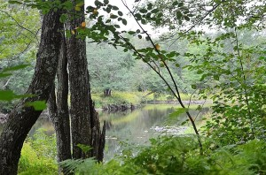 Lehigh River Tucked Away in PA State Game Lands