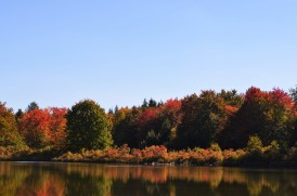 Fall Foliage at Hanby Lake