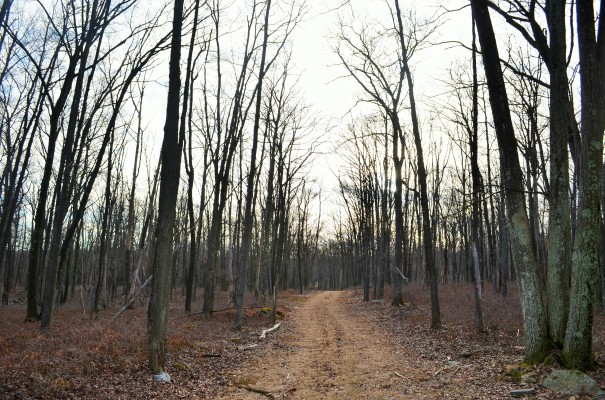 Bear Swamp Trail ~ Early Spring