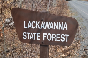 Lackawanna State Forest